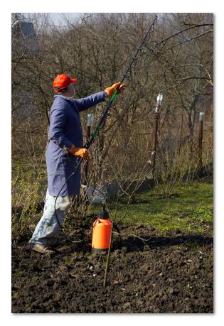 Опрыскивание деревьев железным купоросом